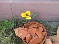 Blüte über den Scherben