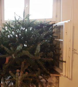 Weihnachtsbaum wird aus dem Fenster geworfen