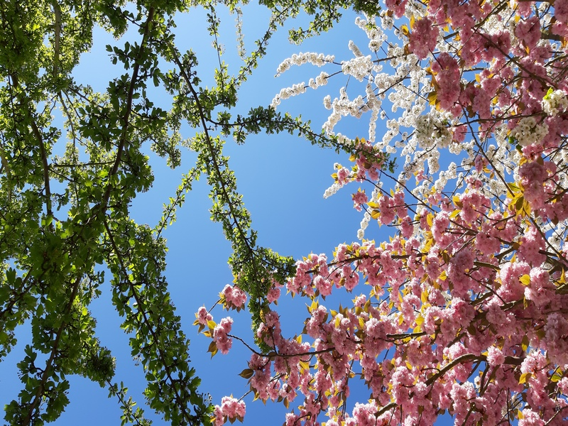 Baum Begrüßung